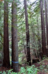 Photo Credit: Galen Doherty, Sanctuary Forest