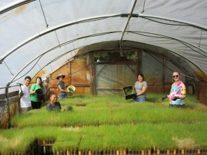 Interns and Volunteers help at the nursery